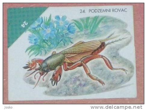 UNDERGRAUND GRAVEDIGGERS ( Croatia Sticker ) Insectes Insects Insectos Insekt Insetto Inseto Croatie Autocollant - Unclassified