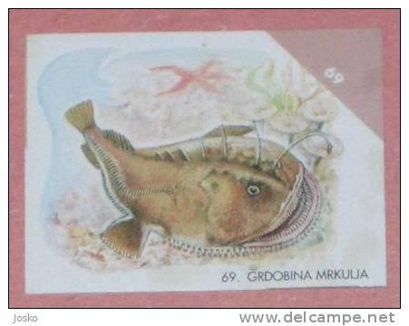 MONKFISH ( Croatia Sticker ) Lotte Rape Eeeteufel Undesea Underwater Sea Marine Life Fish Poisson Croatie Autocollant - Unclassified