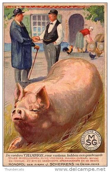 CPA COCHON COCHONS  ** PIG PIGS **  VARKEN ** DE VOEDERS CHAMPION SELECTIONS MAXIMA GEMBLOUX MONOPOL SCHEPKENS - Cochons