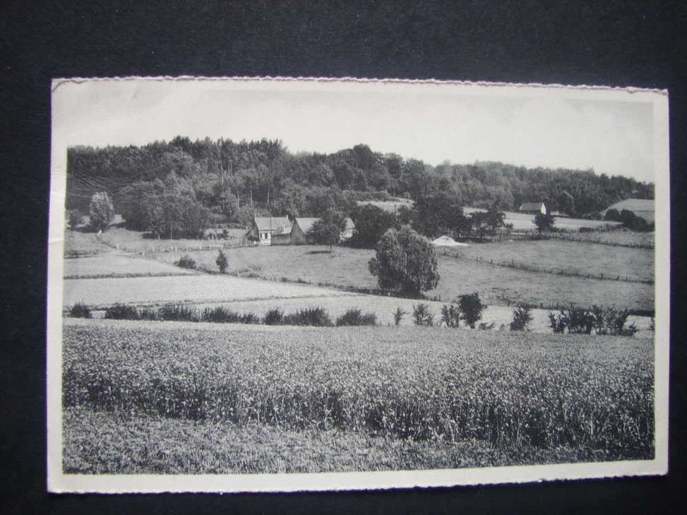 CP. 3037. Amougies.  Panorama - Mont-de-l'Enclus