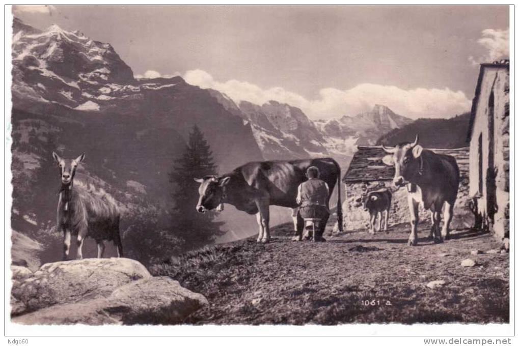 * Alpwirtschaft - Bilder Aus Dem Schweiz . Volksleben - BE Berne