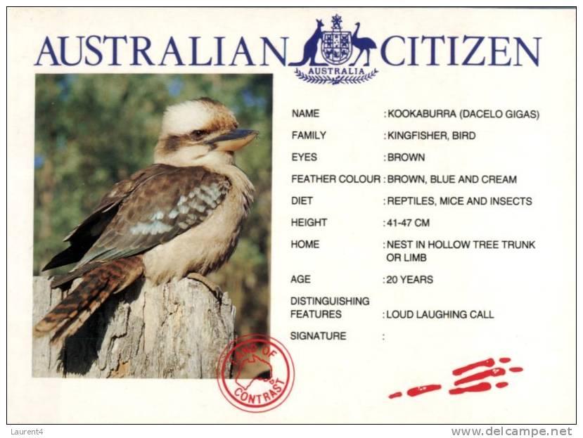 (445) - Bird - Oiseau - Kookaburra - Oiseaux