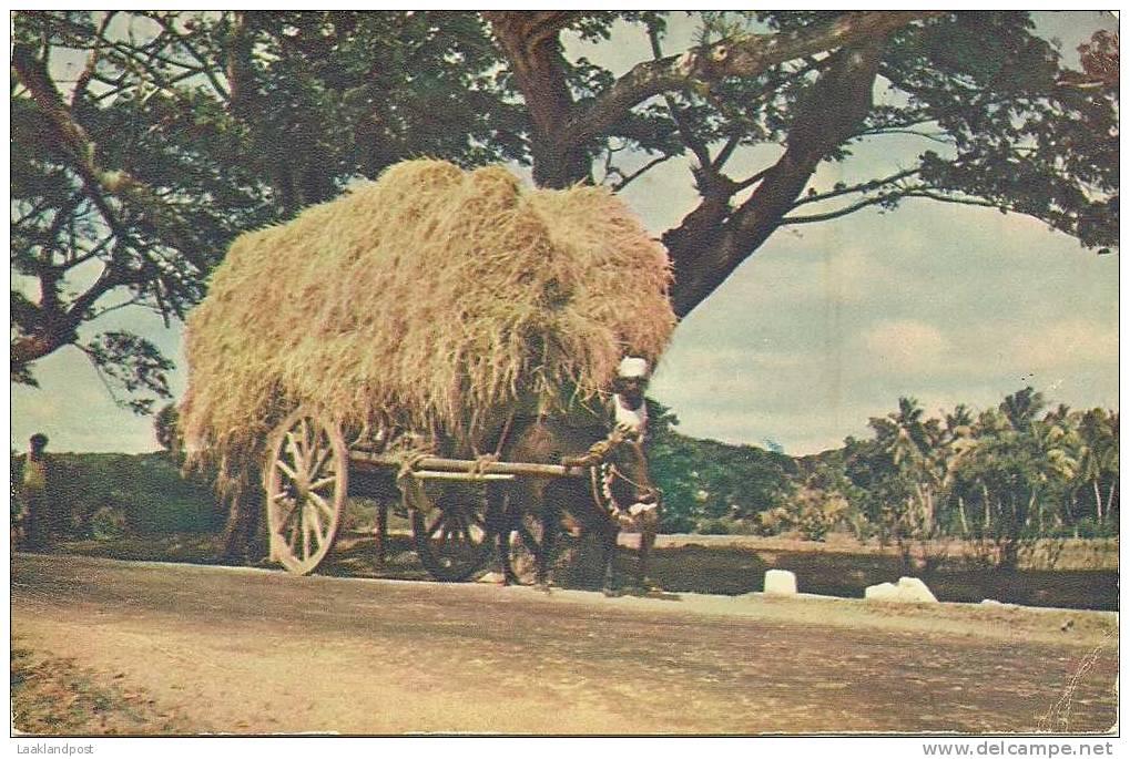 CEYLON, HAY CART - VINTAGE COLOUR CARD CARRIAGE - Landbouwers