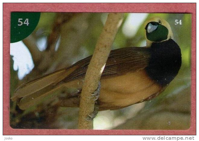 GREAT BIRD OF PARADISE - Paradisaea Apoda ( Croatia Sticker ) Paradisier  * Croatie Autocollant - Unclassified