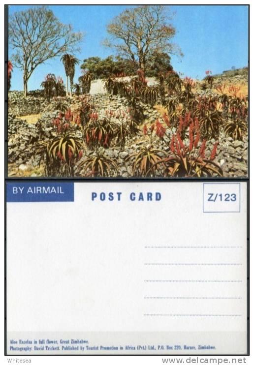 Ak Zimbabwe - Pflanzen,plant - Aloe Exelsa - Simbabwe