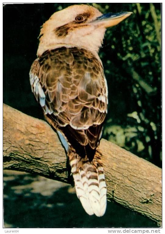 (520) Bird - Oiseau - Kookaburra - Oiseaux