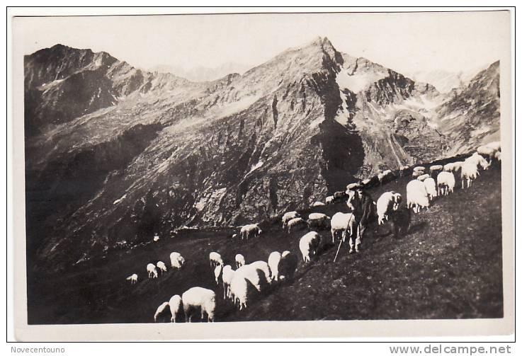 PIEMONTE - TORINO - Val Soana -Ronco Canavese - Punta Cavallo Tra La Punta Verzel E La Cima Di Pal - Pascolo - Sin Clasificación