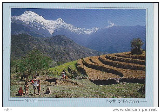 Nepal  Pokhara - Nepal