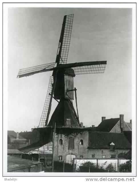 LEDEGEM (W.Vl.) - Barietfoto 12,7 X 18 Cm. Van De Molen Van Verloo. Duitse Oorlogsfoto Uit 1917. Zeldzaam! - Lieux