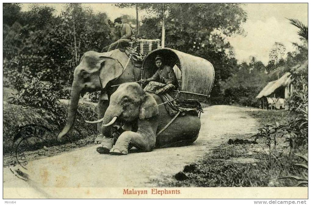 MALAYAN ELEPHANTS . - Malaysia