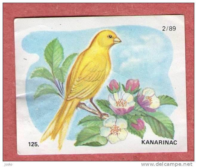 CANARY BIRD ( Croatia Chocolate Card ) Canari Canario Kanarienvogel Canarino Bird Oiseau Birds Ave Pajaro Uccello Vogel - Other Collections