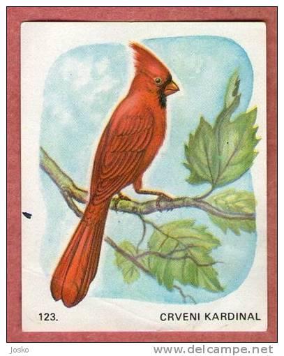RED CARDINAL ( Croatia Chocolate Card ) Rouge Cardinal Cárdenas Rosso Cardinale Bird Oiseau Birds Ave Pajaro Uccello - Unclassified