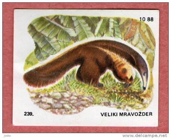 GREAT ANTEATER ( Croatia Chocolate Card ) Tamanoir Gran Oso Hormiguero Große Ameisenbär Formichiere Grande Tamanduá - Unclassified