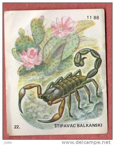 SCORPION BALKAN ( Croatia Chocolate Card ) Scorpions Escorpión Skorpion Scorpione Escorpião Schorpioen - Unclassified