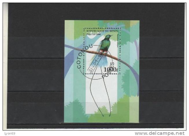 OISEAUX  BENIN - Birds