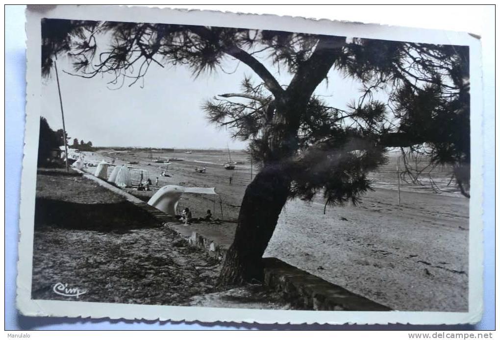 D 17 - Saint Trojan - Ile D'oleron - Vue Générale De La Petite Plage - Ile D'Oléron