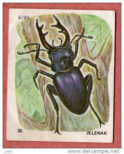 STAGBEETLE ( Croatia Chocolate Card ) Hirschkäferzange Beetle Coléoptère Escarabajo Scarafaggio Kever Besouro - Other Collections