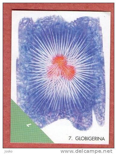 GLOBIGERINIDA ( Croatia Sticker ) Plankton Plancton Planktons Planctons Undersea Marine Life Sea Underwater - Stickers