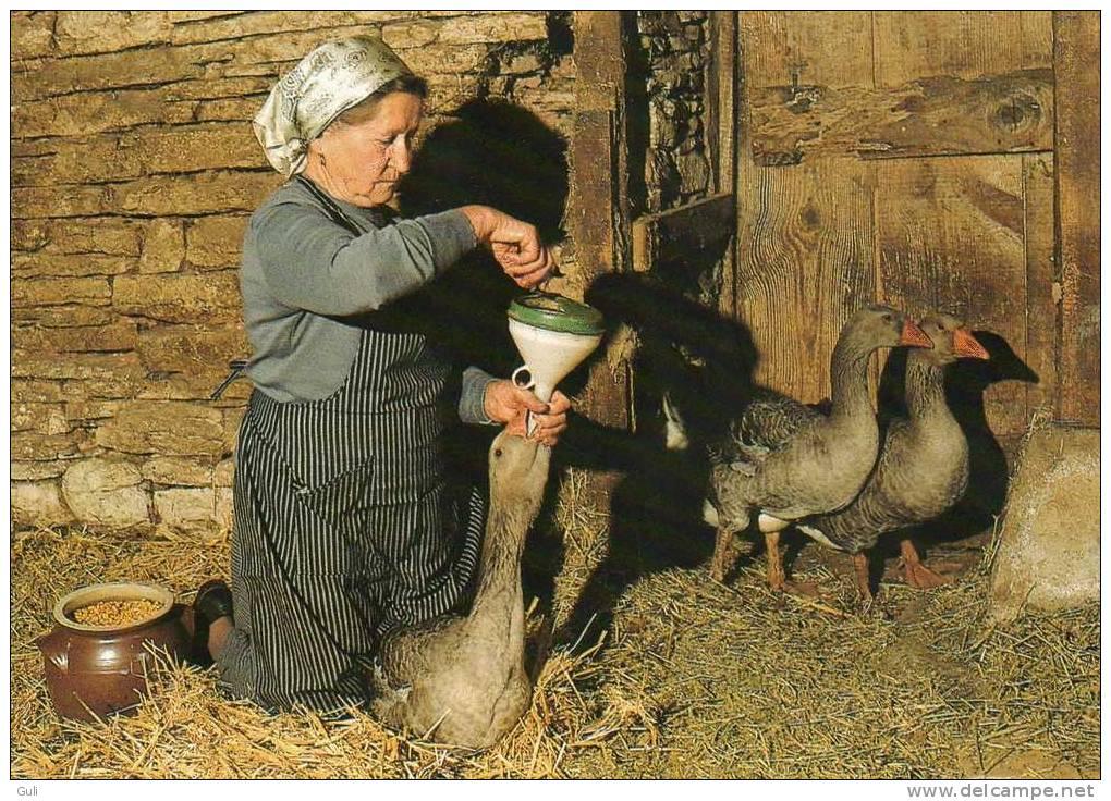 Agriculture > Elevage-Terroir Et Traditions- Le Gavage Des Oies ( Scène De La Vie Quotidienne) *PRIX FIXE - Elevage