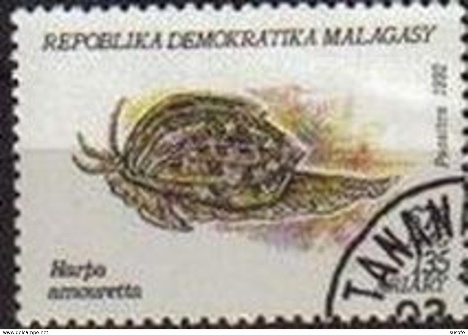 Madagascar 1992 Scott 1127 Sello * Moluscos Harpa Amouretta 135A Michel 1421 Malagasy Madagascar Stamps Timbre Briefmark - Madagascar (1960-...)