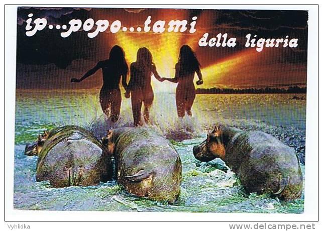 Flusspferd Nilpferd Hippopotamus Hroch Liguria - Flusspferde