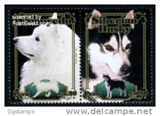 Peru 2010 ** Perros Samoyedo Y Siberian Husky - Cani