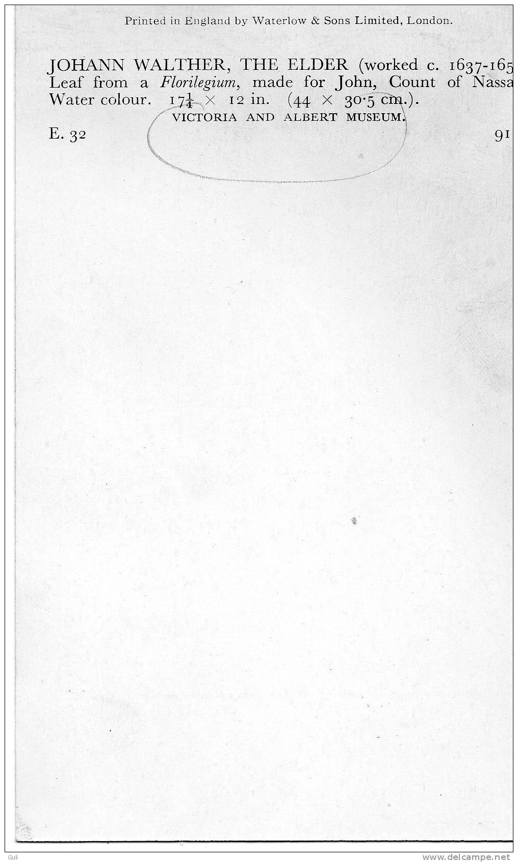 Botanique-Johann WALTHER-The ELDER Leaf From A Florilegium ( Fleur Fleurs Florilège)-Victoria An Albert Museum-PRIX FIXE - Vieux Papiers