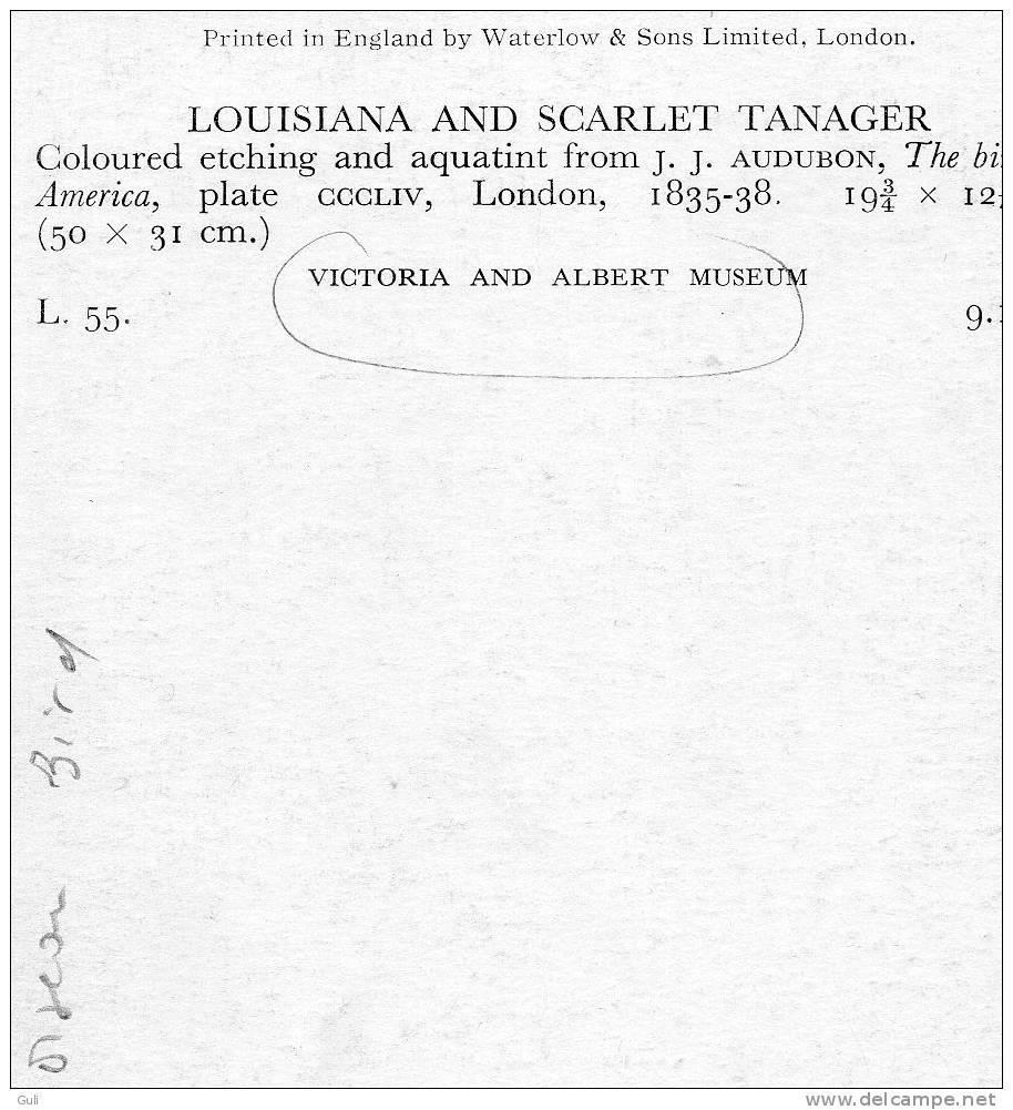 Ornithologie-The Birds Of America-J-J.AUDUBON (oiseau Bird) Louisiana And Scarlet Tanager-Victoria And Albert  Museum - Documentos Antiguos