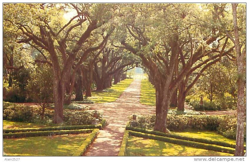 ST. FRANCISVILLE - Rosedown Plantation And Gardens, Avenue Of Oaks Viewed From Upper Gallery Of Manor House (Pub Holmes) - Baton Rouge