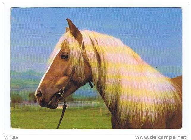 Haflinger Horse Gebirgspferd Pferd Kun ZOO Czech - Pferde