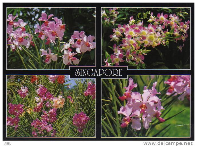 Hybrid Orchids From The Botanical Garden Of Singapore.  Une Carte Postale Neuve - Singapore