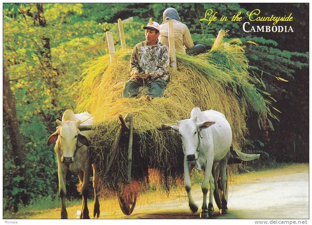 Ph- CPM Cambodge (Cambodia) Life In The Countryside - Cambodge