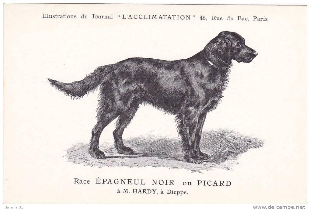 CPA De 1900 @ CHIEN Race EPAGNEUL NOIR Ou PICARD (de Dieppe) @ Dos Non Séparé - Chiens