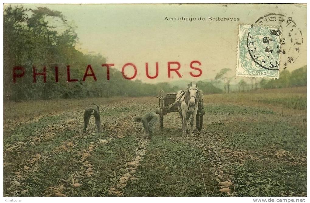 ARRACHAGE DE BETTERAVES - Cultures