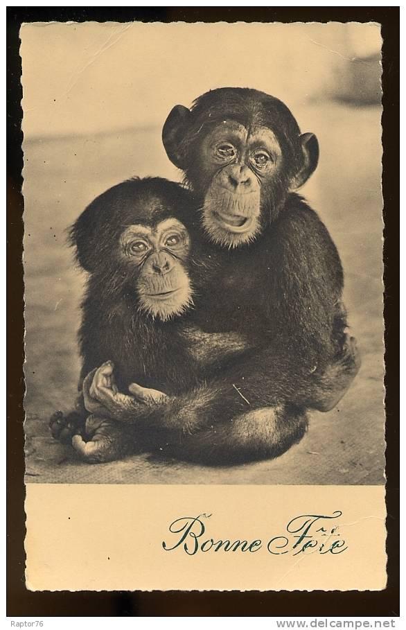 CPM Faune Animaux  SINGES  Chimpanzés  Bonne Fête - Apen