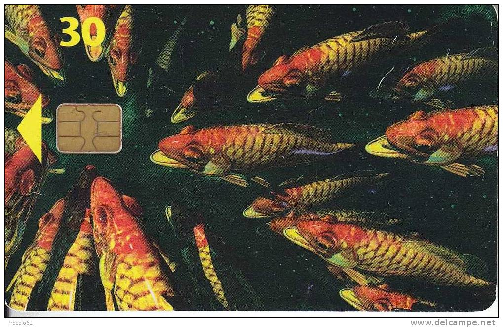 DANIMARCA DANMARK TELEKORT 30 KR. 31.12.97 PESCI FISHES Usata - Pesci