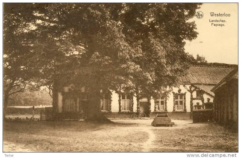 Westerloo - Landschap - Oud Typisch Huis - 1938 ( Verso Zien ) - Westerlo