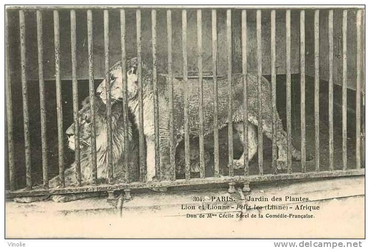 Animaux  Réf AN -23 : Paris : Jardin Des Plantes : Lion D´Afrique - Lions