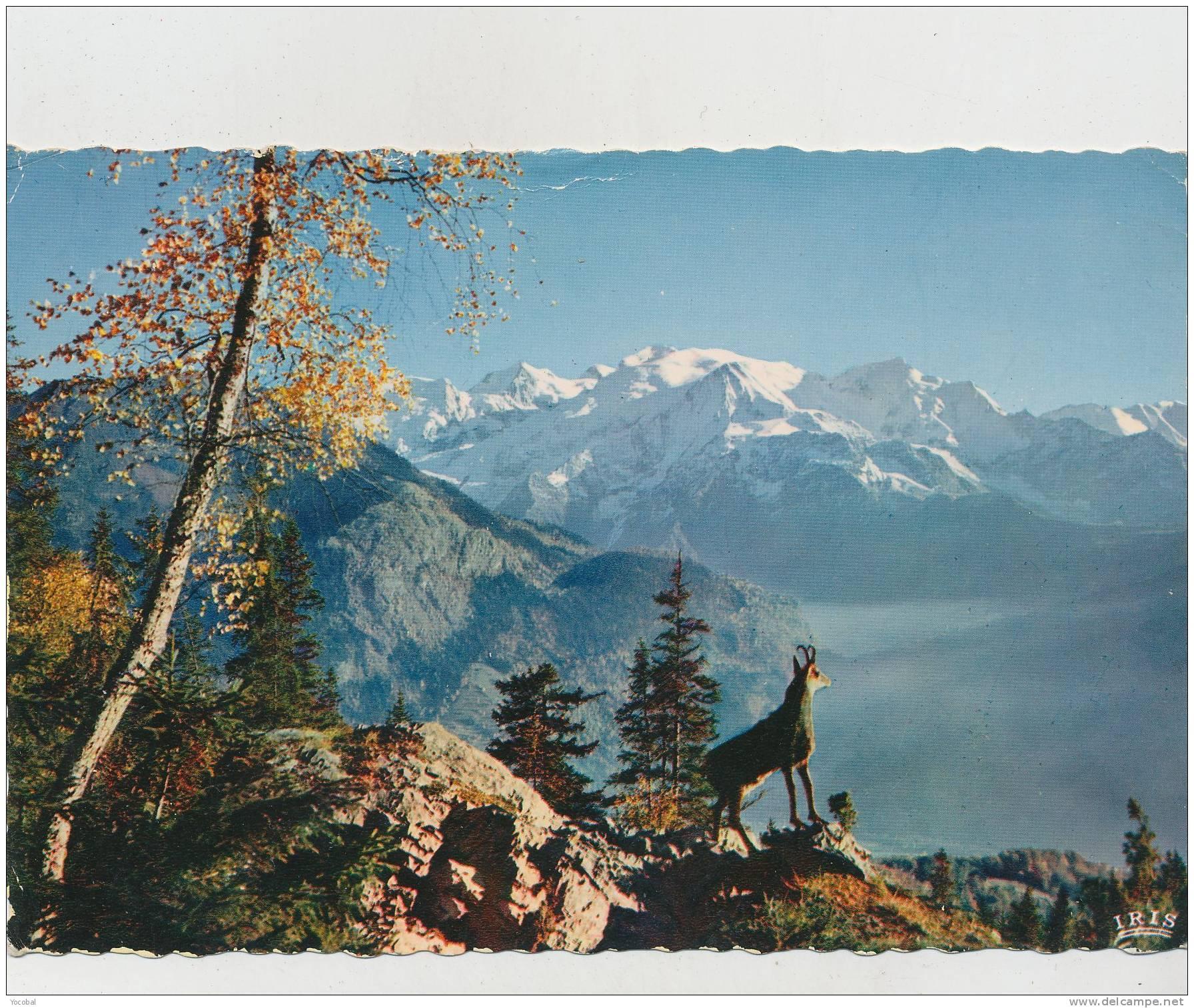 Cp , ANIMAUX , Le Chamois Des Alpes - Bagne & Bagnards