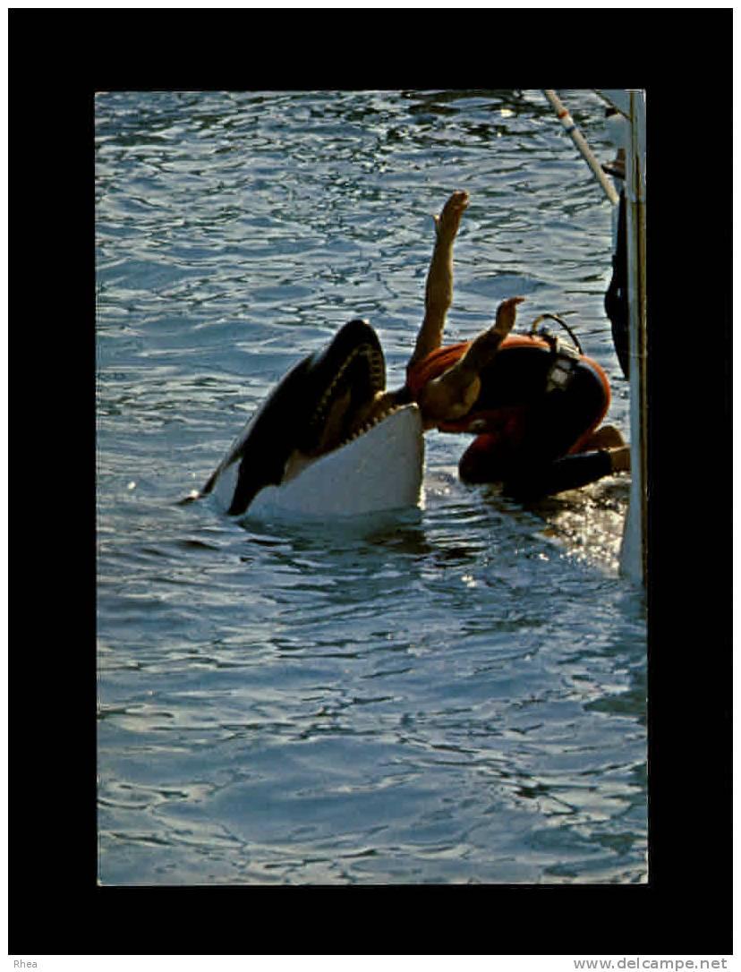 06 - ANTIBES - Marineland - Route De Biot - Martin A Sa Tete Dans La Gueule De L´orque - Antibes