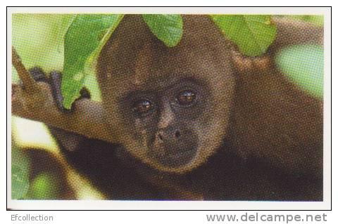 Singe Laineux,forêt Amazonniene,Amérique Du Sud,vignette Jungle Mania N°24 - Adesivi