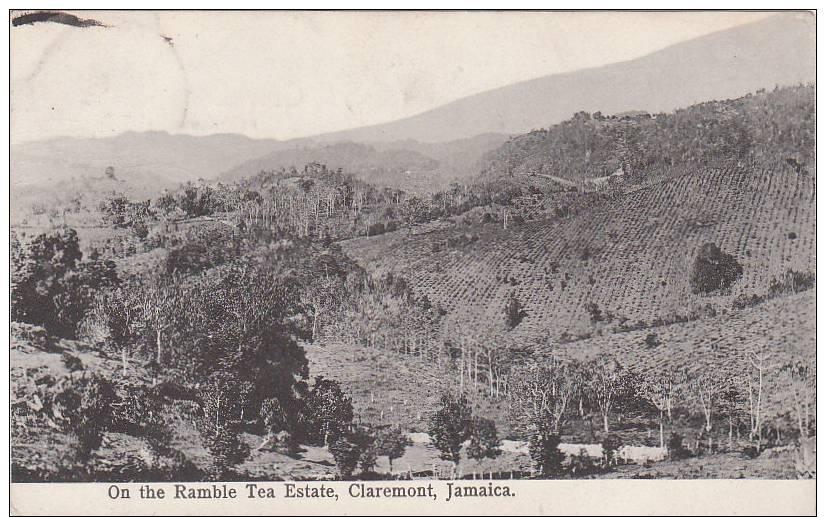 On The Ramble Tea Estate Claremont Jamaica - Jamaica