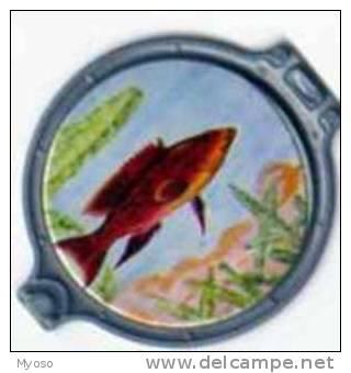 Collection VITHO Les Merveilles De La Mer Hublot N°44 Serranus Louti - Aquaristik