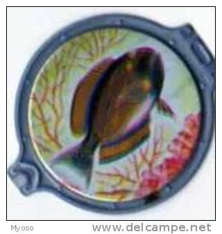 Collection VITHO Les Merveilles De La Mer Hublot N°58 Acanthurus Dussumieri - Aquaristik