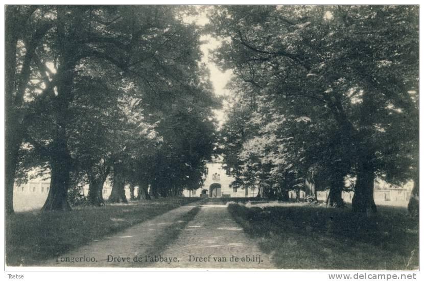 Tongerloo - Dreef Van De Abdij -1911 ( Voir Verso ) - Westerlo