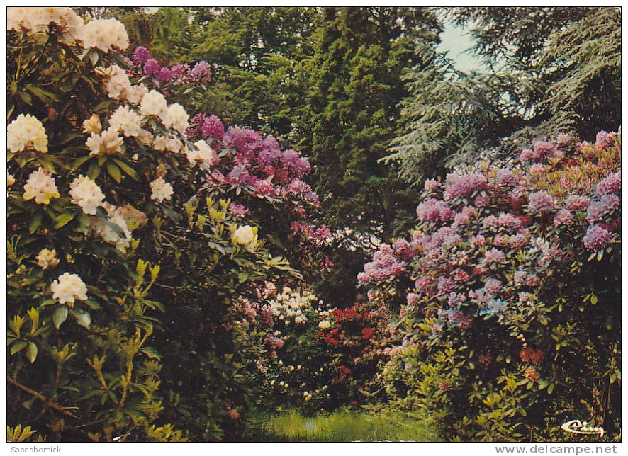 18633 Cerisi Belle Etoile, Allée Rhododendrons. A 61.078.00.0.0056 Cim. - France