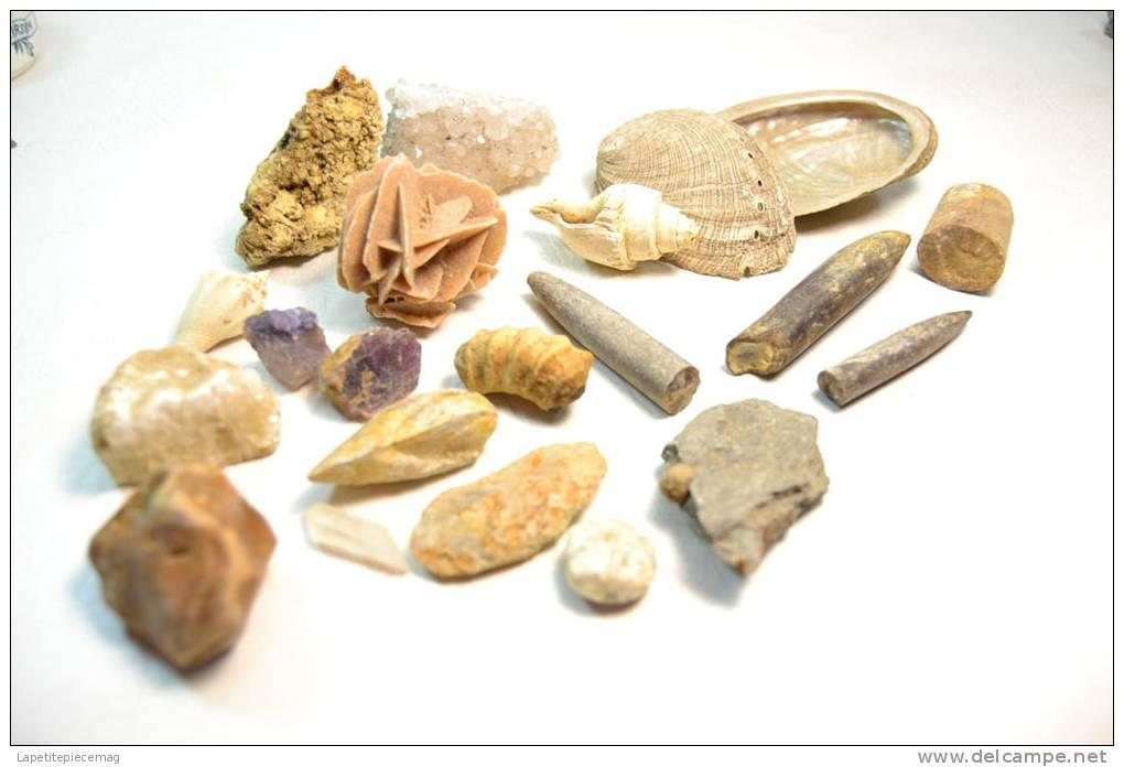 Lot De Fossiles Et Minéraux En Vrac - Fossils