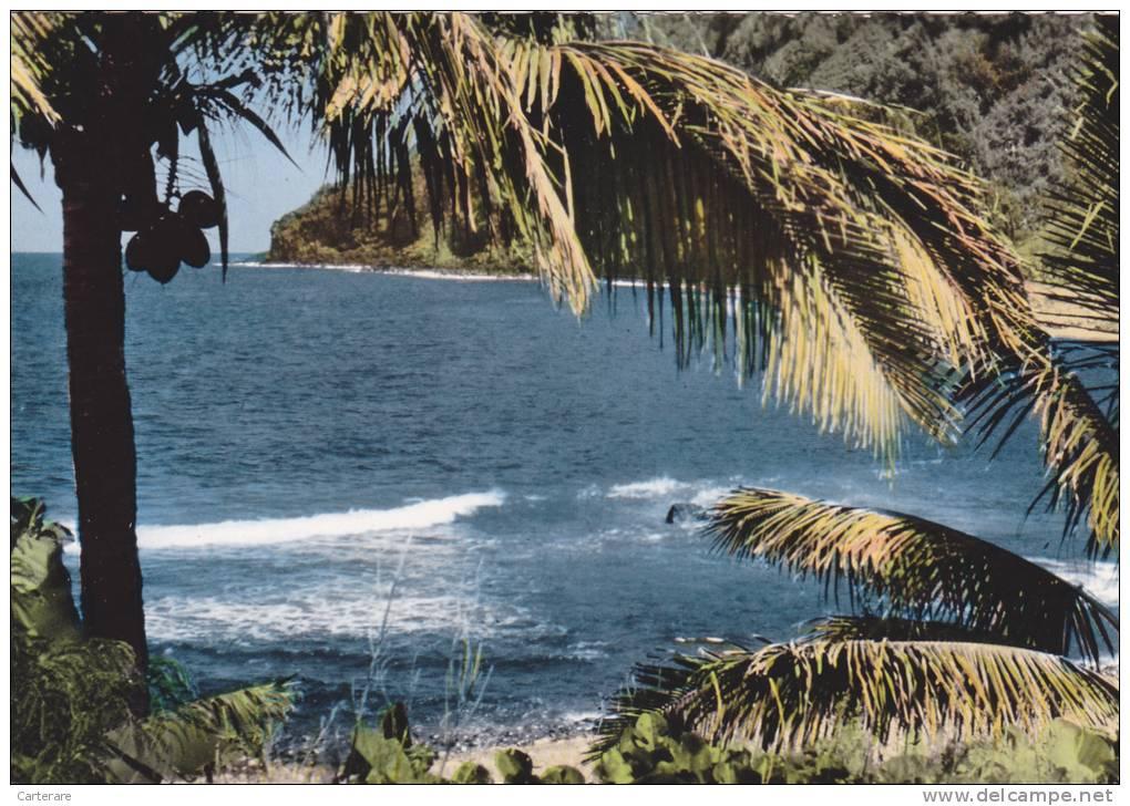 Ile De La Réunion,ile Française,outre Mer,archipel Des Mascareignes,océan Indien,MANAPANY LES BAINS,palmier - Autres