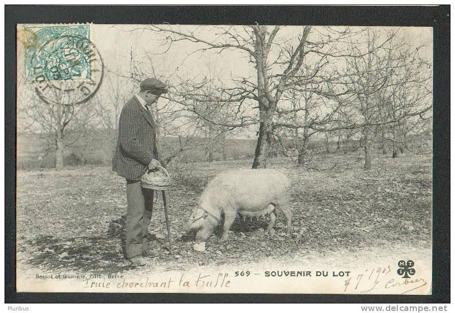 FRANCE,  SOUILLAC , RECOLTE DE LA TRUFFE, OLD POSTCARD USED 1903, BESSOT ET GUIONIE, EDIT, BRIVE - Souillac