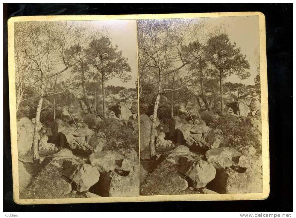 PHT4 SEINE ET MARNE Photo Originale Fin Du 19 ème Siècle, Fontainebleau Sentier Des Mastodontes - Photos Stéréoscopiques